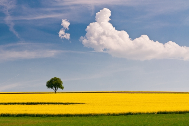 tree_field_cloud_yellow_green_sky_lonely_simplicity_47287_1920x1280